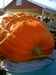 South Jersey Pumpkin Show Giant Pumpkin Weigh Off